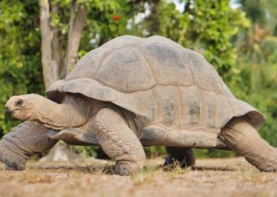 Esmeralda-tortue
