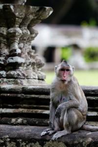 IMG_0712_cambodge_raw-200x300