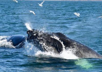 Islande-Baleines-460x295