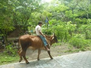 Nicaragua-Ometepe-8_PhotoRedukto1-300x225