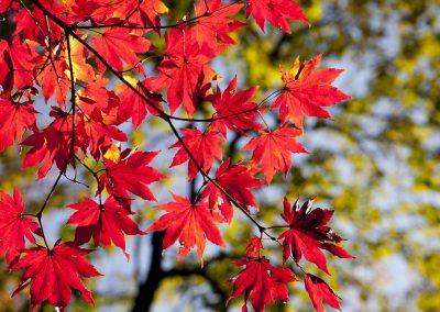 autumn-leaves-2789234_1280