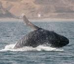 baleines.3