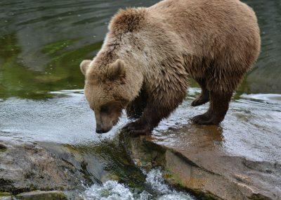 bear-2522491_1280