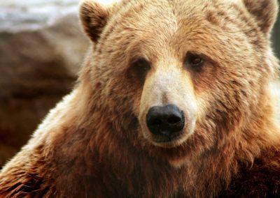 bear-2747135_1280