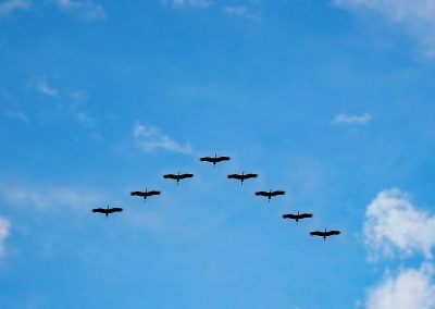 birds-216827