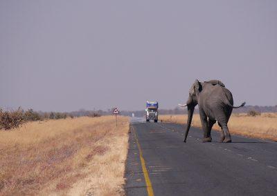 botswana-1653101_1280