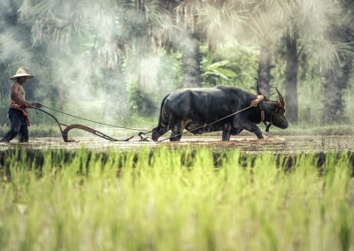 buffalo-1822574_1280