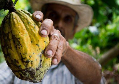 cocoa-452911_1280