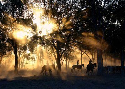 cowboys-1826527_1280