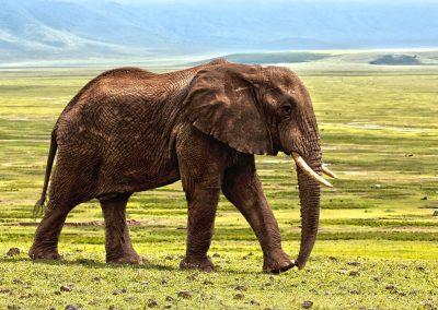elephant-1421167_1280
