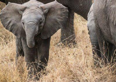 elephants-285515_1280