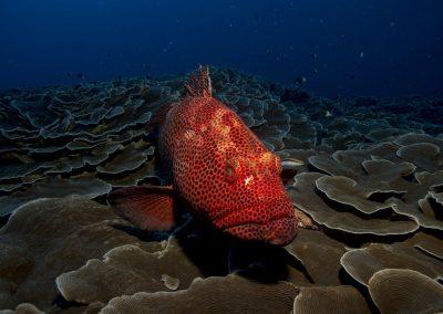 fish-1118892_1280