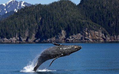 Argentine, Observation des Baleines