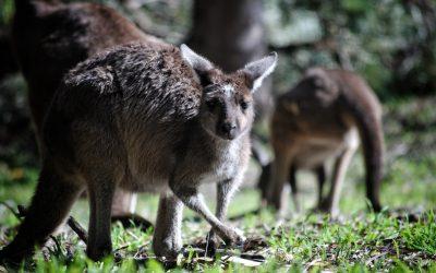 Australie Les Incontournables en 21 jours