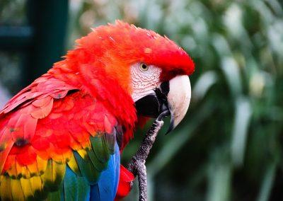 macaw-4307200_1280