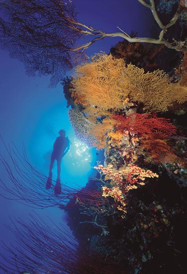 queensland-port-douglas-poseidon-poseidon_diving