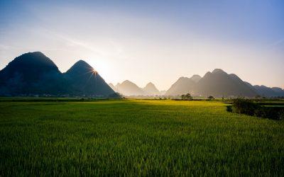 Laos , Immersion avec les Eléphants