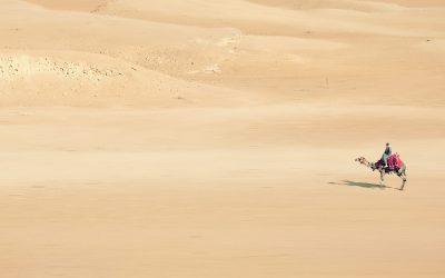 Egypte, Désert Blanc et Palais