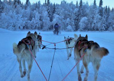 sled-3953650_1280