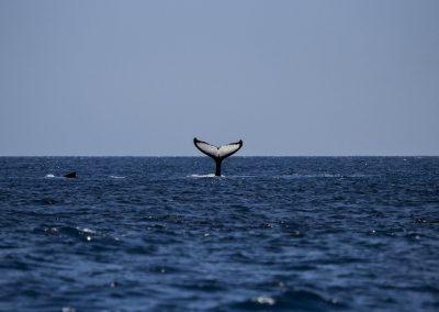 whale-1118876_1920