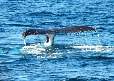whale-367233_1280